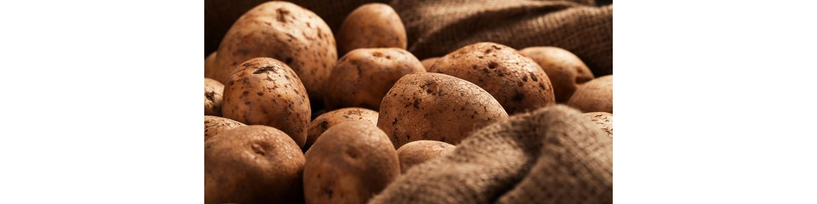 Cultura cartofilor - Sfaturi utile de plantare si ingrijire