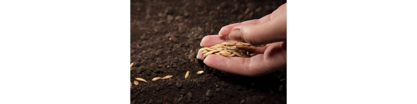 Semanatul semintelor