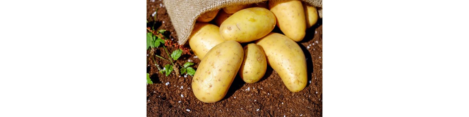 Tratamente aplicate pentru cultura cartofului