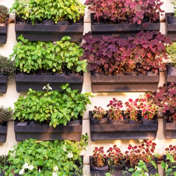 Jardiniere si suporturi