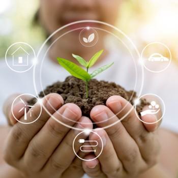Produse ECOLOGICE pentru protectia plantelor