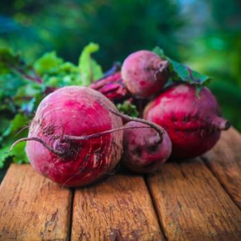 Sfecla rosie pentru salata