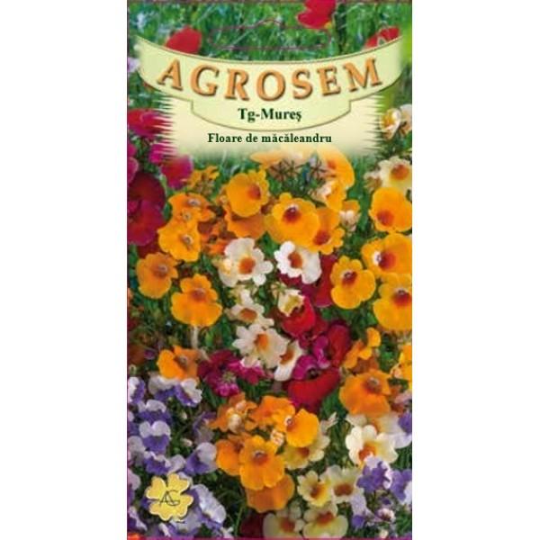 Seminte de flori anuale Floare de Macaleandru Mix, 0,2 grame, Agrosem