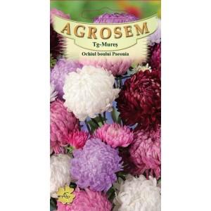 Seminte de flori anuale Ochiul Boului Paeonia Mix, 0,5 grame