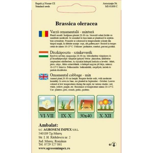 Seminte de flori bianuale Varza Ornamentala Mix, 0,4 grame