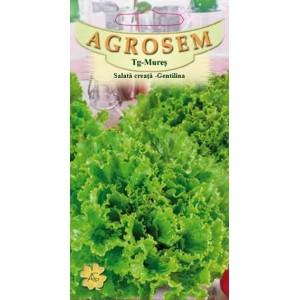 Seminte de salata creata Gentilina, 2 grame, Agrosem