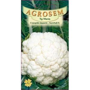 Seminte de conopida timpurie Snowball X, 1 gram