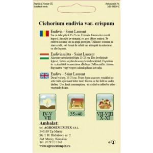 Seminte de endivia Saint Laurent, 2 grame, Agrosem