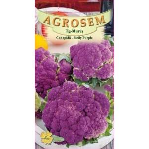 Seminte de conopida mov Sicily Purple, 1 gram