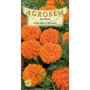 Seminte de flori craite pitice flori mari portocalii, 0,40 grame, Agrosem