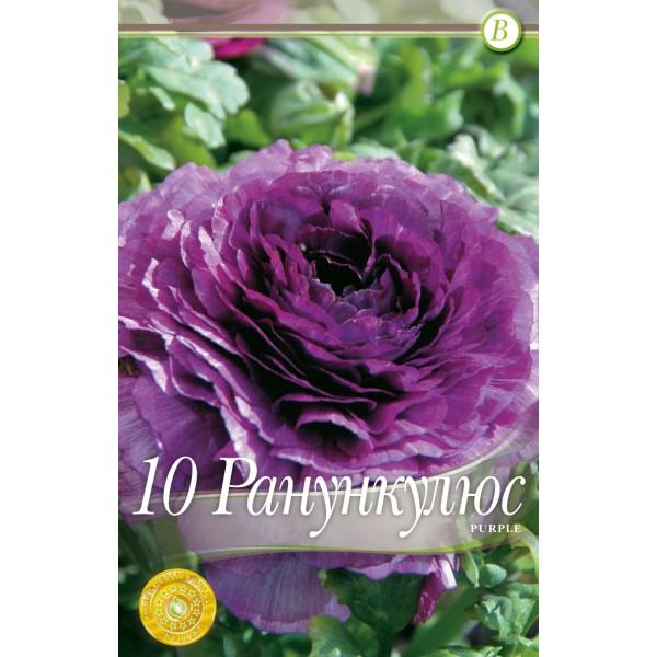 Bulbi de ranunculus purple - 10 bucati