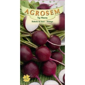 Seminte de ridichi de luna violet malaga, 4 grame