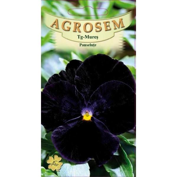 Seminte de flori panselute negre, 0,1 grame