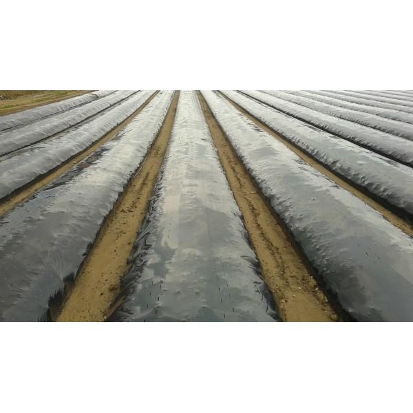 Folie pentru mulcire neagra neperforata, 15 microni, 1, 2 m x 2400 m