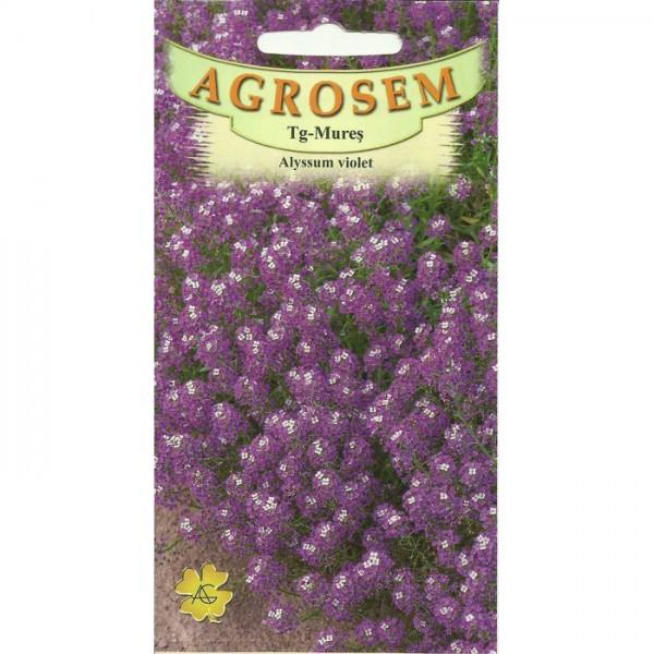 Seminte de flori alyssum violet, 0,3 grame, Agrosem