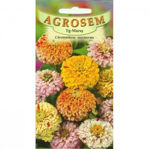 Seminte de flori anuale carciumarese marmorate, 0,80 grame, Agrosem