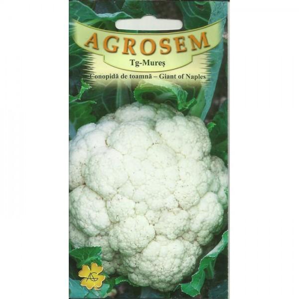 Seminte de conopida de toamna Giant of Naples, 1 gram