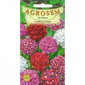 Seminte de flori garofite de gradina mix, 0,75 grame