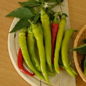 Seminte de ardei iute semitimpuriu Iancu F1, 500 seminte, Hektar