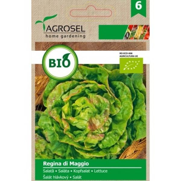 Seminte BIO de salata Regina di Maggio, 3 grame, PG-6, Agrosel