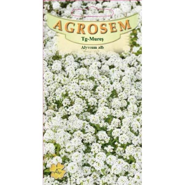 Seminte de alyssum alb Lobularia Maritima, 0,3 grame, Agrosem Impex