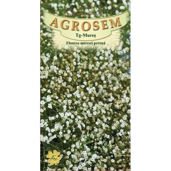 Seminte de floarea miresei perene alb, 0,30 grame, Agrosem Impex