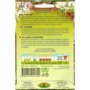 Seminte de cleoma - floare paianjen, Florian