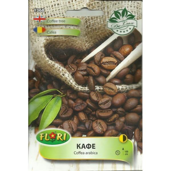 Seminte de cafea arabica, Florian