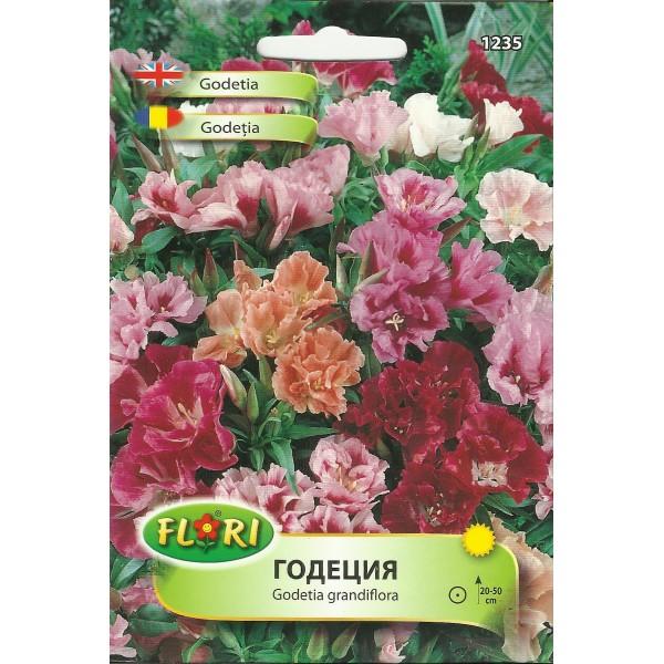 Seminte de azalee de gradina mix, Florian