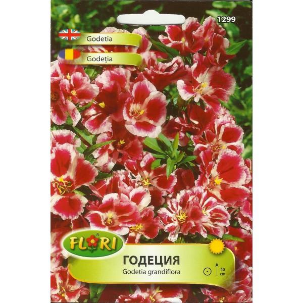 Seminte de azalee de gradina grandiflora, Florian
