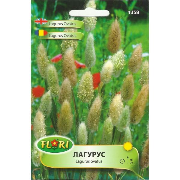 Seminte de lagurus ovatus, Florian