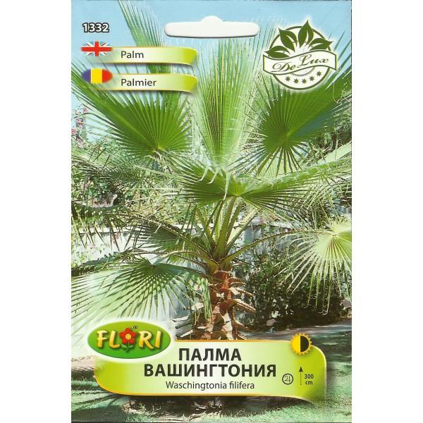 Seminte de palmier Washington, Florian