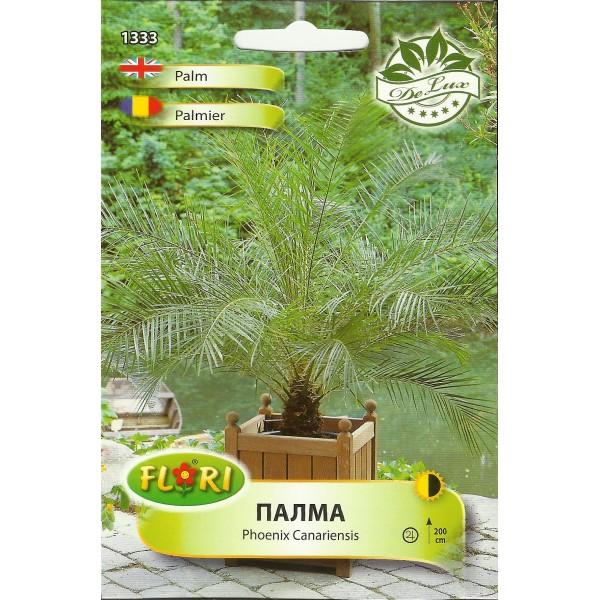 Seminte de palmier Phoenix, Florian