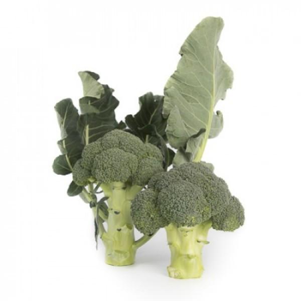 Seminte de broccoli Larsson F1, 1000 seminte, Rijk Zwaan