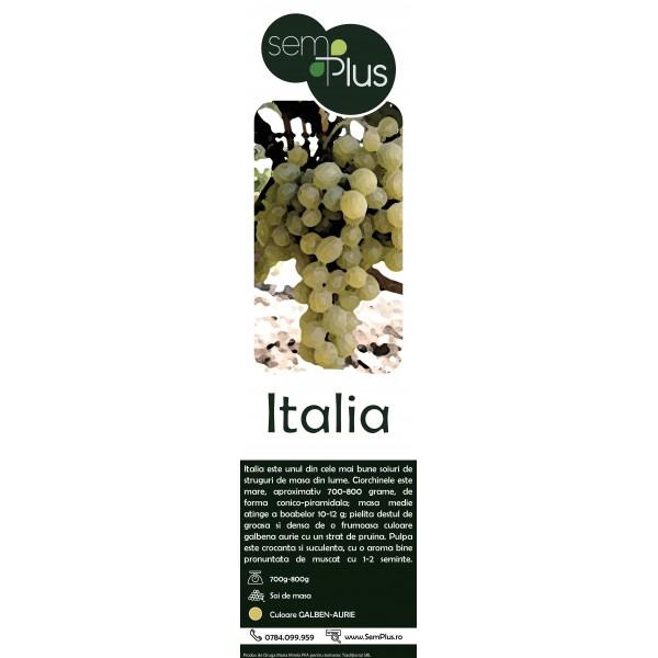 Butasi de vita de vie de masa Italia, 1 bucata, SemPlus