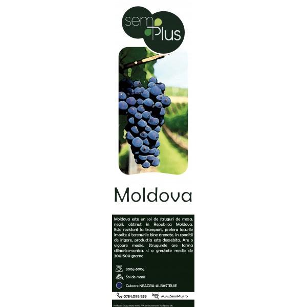 Butasi de vita de vie Moldova, 1 bucata, SemPlus