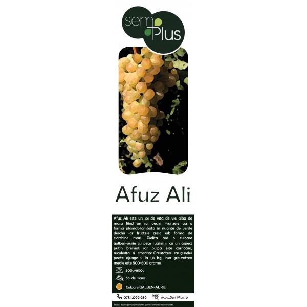 Butasi de vita de vie Afuz Ali, 1 bucata, SemPlus
