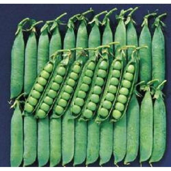 Seminte de mazare Avola, 100.000 seminte, Seminis