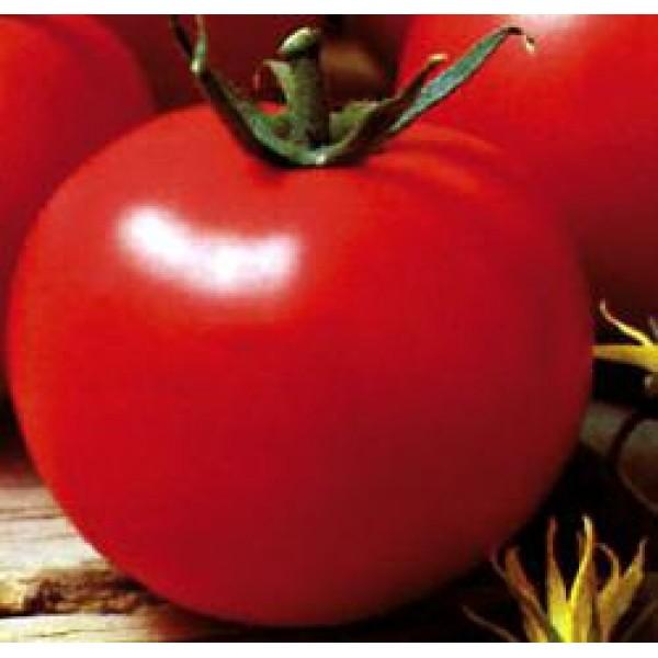 Seminte de rosii timpurii nedeterminate Optima F1- 500 seminte