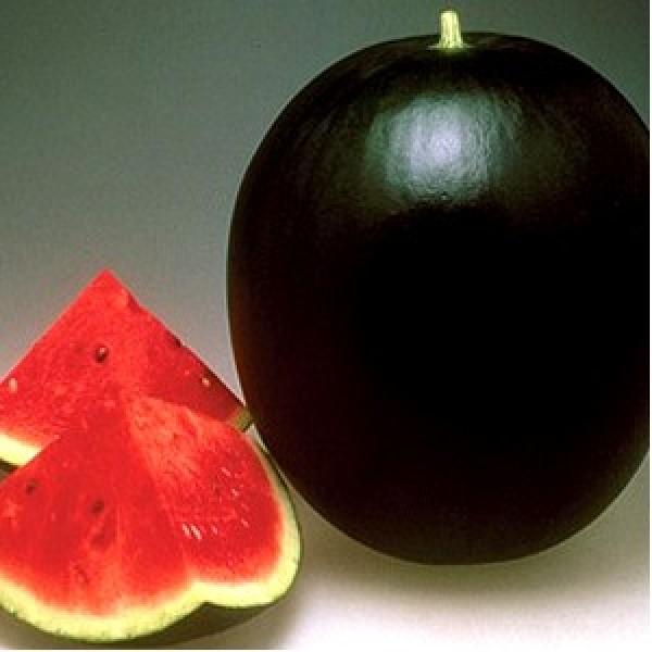 Seminte de pepene verde Pata Negra F1, 1000 seminte, Seminis