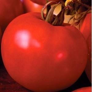 Seminte de rosii timpurii nedeterminate Marissa F1 - 100 seminte