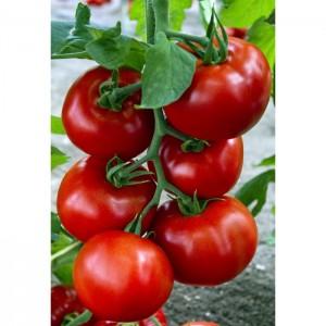 Seminte de tomate nedeterminate Zadurella F1 (V370 F1) Vilsem, 250 seminte